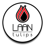 Laan Tulips Veredeling